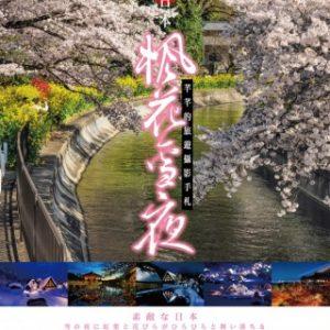 絕美日本*楓花雪夜:芊芊的旅遊攝影手札
