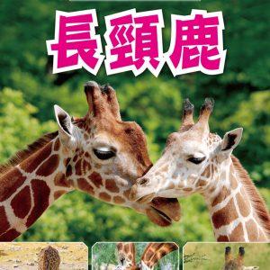 動物奇觀:長頸鹿
